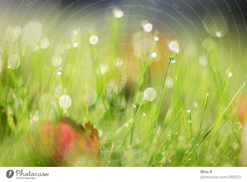 Green Leaf Meadow Grass Wet Drops of water Dew Morning Autumnal Environment