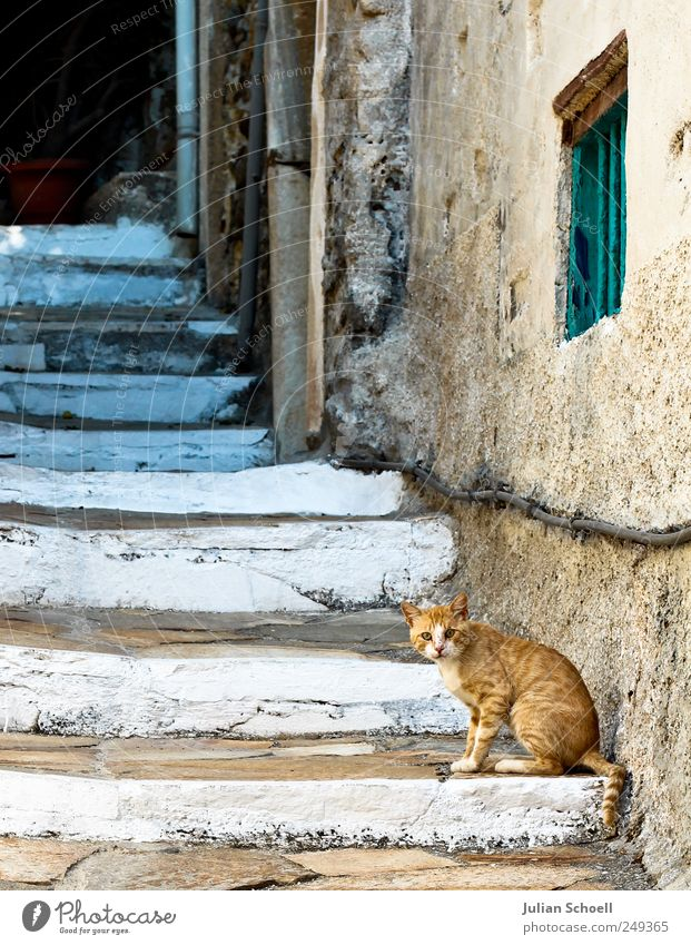 Old Blue White Beautiful Vacation & Travel Calm Yellow Stone Cat Stairs Animal face Soft Curiosity Pelt Historic Watchfulness