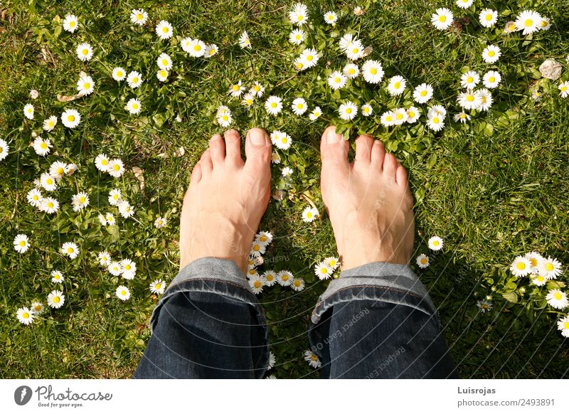 bare feet on green meadow with white and yellow flowers Luxury Beautiful Healthy Wellness Senses Relaxation Meditation Human being Young woman