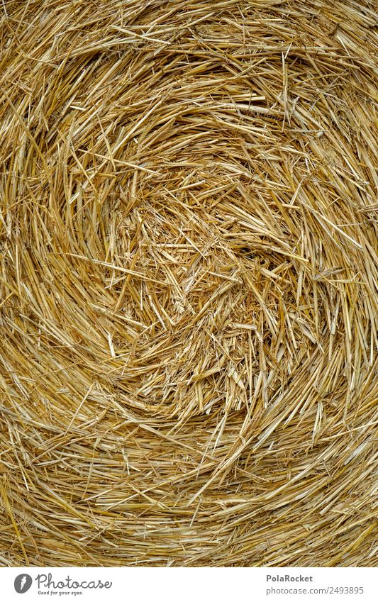 #S# Straw spiral Nature Climate Blonde Agriculture Warmth Swirl Whirlpool Field Farmer Bale of straw Grain Creativity Yellow Gold Many Pattern Rotate Harvest