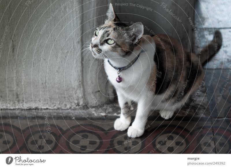 House - Mietze Wall (barrier) Wall (building) Animal Pet Cat Animal face Pelt Paw Domestic cat Head Muzzle Ear Eyes Looking 1 Observe Sit Dark Curiosity Loyalty