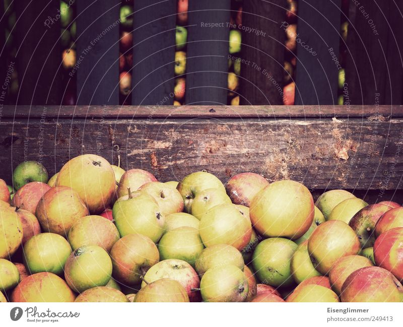 Nature Garden Healthy Fruit Apple Agriculture Harvest Complex Storage area Wooden box