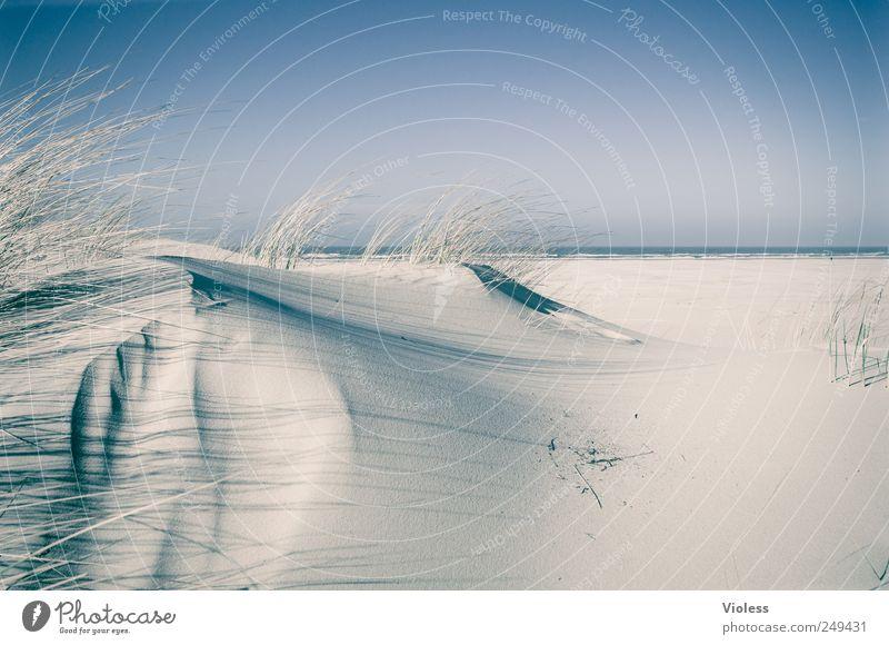 Spiekeroog ... Soft. Landscape Sand Sky Coast Beach Island Discover Relaxation North Sea Islands Dune Marram grass Colour photo Exterior shot Copy Space right