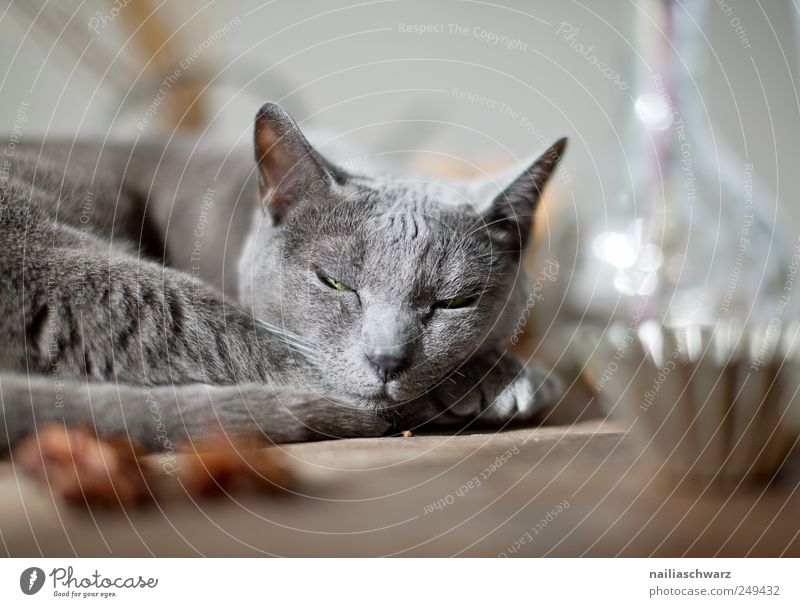 Blue Animal Relaxation Gray Dream Moody Small Metal Cat Contentment Glass Esthetic Sleep Cute Animal face Pelt