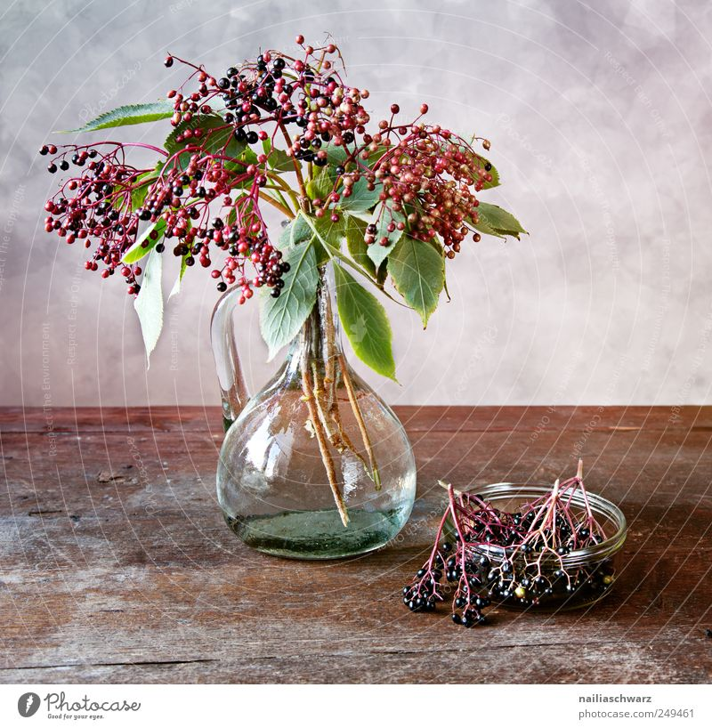 Old Green Beautiful Plant Wood Glass Elegant Fruit Esthetic Fresh Table Bushes Romance Exceptional Violet Painting and drawing (object)