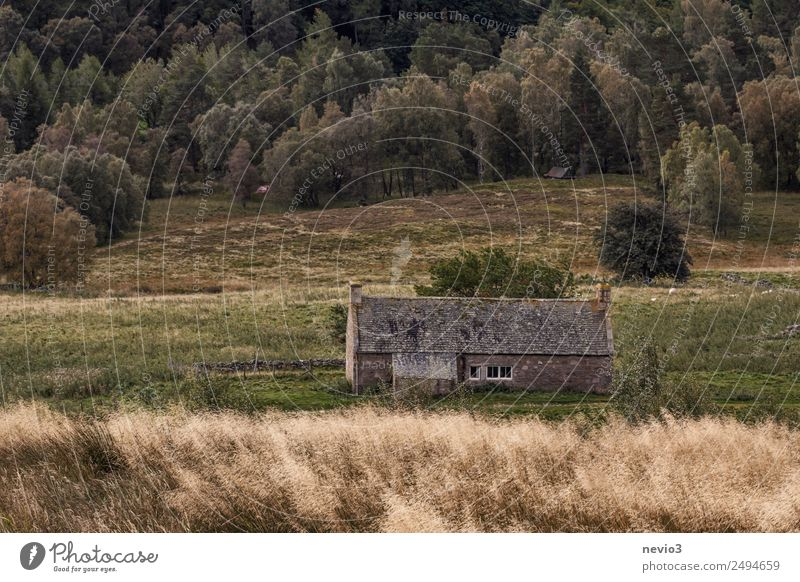 Scottish stone house at the edge of the forest Environment Nature Landscape Wind Grass House (Residential Structure) Hut Historic Cold Gray Fieldstone house