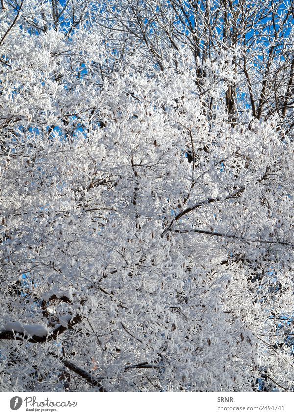 crown of the bare tree Winter Snow Environment Nature Climate Weather Tree Blue White branch clear cold Frost Frozen Seasons winter tree Colour photo Deserted