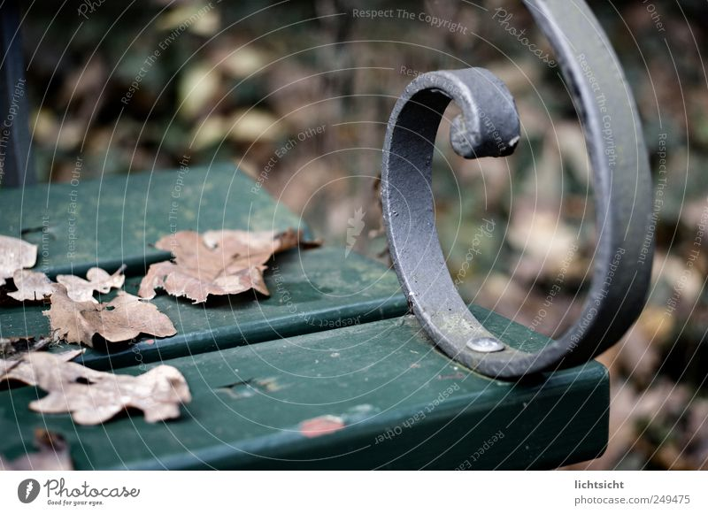 autumn bank Autumn Weather Bad weather Leaf Park Loneliness Grief Sadness Bench Green Brown Silver Curlicue Wooden bench Dank Goodbye Autumn leaves Autumnal
