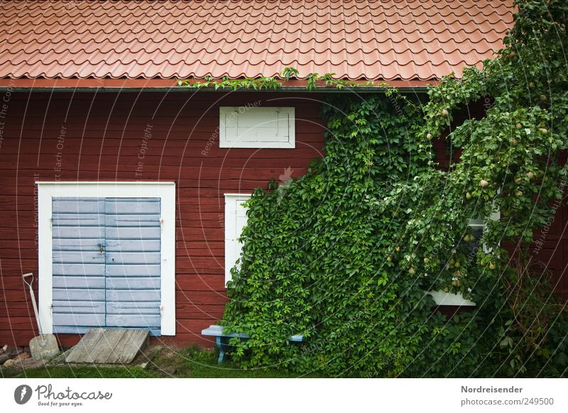 Captivating being Lifestyle Nature Plant Bushes Foliage plant Garden Deserted House (Residential Structure) Wall (barrier) Wall (building) Facade Window Door
