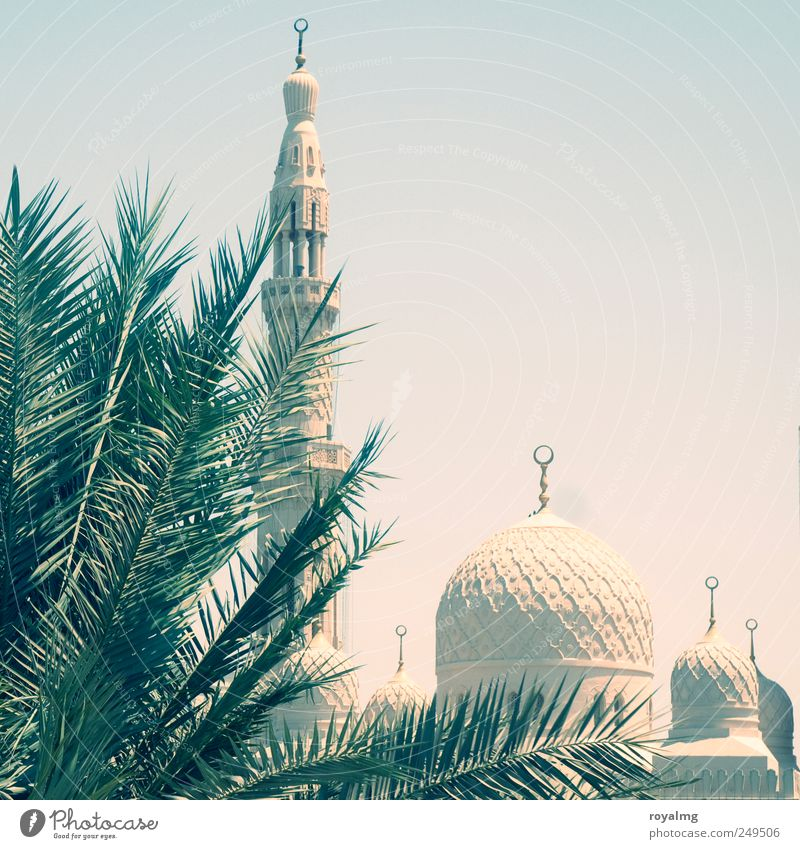 Summer Far-off places Religion and faith Contentment Trip Tourism Belief Monument Landmark Islam Summer vacation Tourist Attraction Cloudless sky Dubai Mosque Arabia