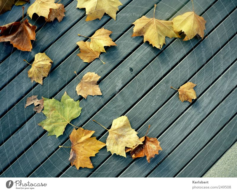 Eternity is in love with the creation of time. Garden Thanksgiving Gardening Environment Nature Plant Autumn Leaf Stairs Balcony Terrace Traffic infrastructure