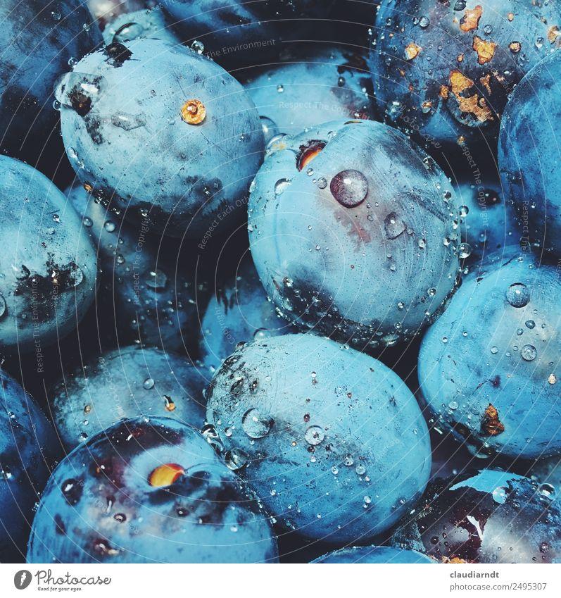 plum wash Food Fruit Plum Nutrition Organic produce Vegetarian diet Summer Garden Fresh Healthy Delicious Wet Juicy Sweet Blue Drops of water Pick Harvest