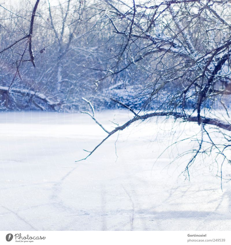 frost Environment Nature Landscape Winter Beautiful weather Ice Frost Snow Tree Forest River bank Cold Blue White Branch Winter's day Winter forest Winter mood