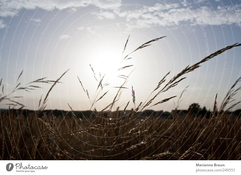 The sun goes down Nature Landscape Plant Air Sky Clouds Horizon Sun Summer Grass Field Observe Authentic Warmth Blue Black White Moody Sunset Agriculture