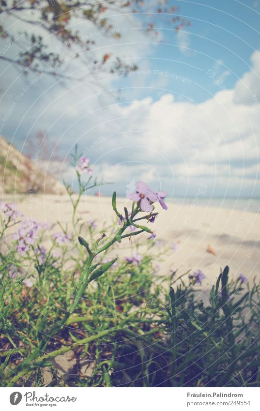 Sky Nature Blue Plant Summer Beach Ocean Flower Vacation & Travel Clouds Calm Relaxation Landscape Blossom Sand Spring