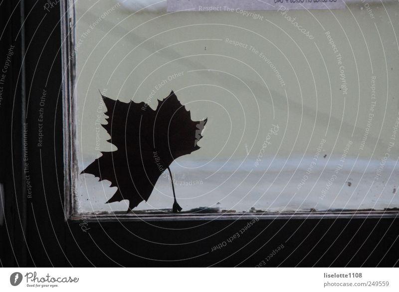 Nature Green White Beautiful Plant Leaf Dark Autumn Environment Gray Sadness Dream Dance Free Esthetic Authentic