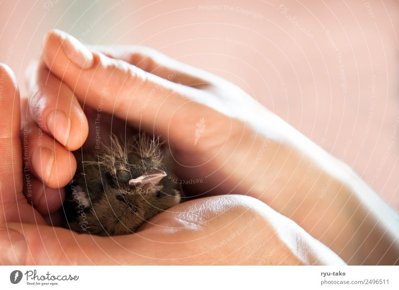Hand Animal Baby animal Warmth Bird Power Cute Help Touch Soft Protection Safety Trust Considerate Safety (feeling of) Optimism