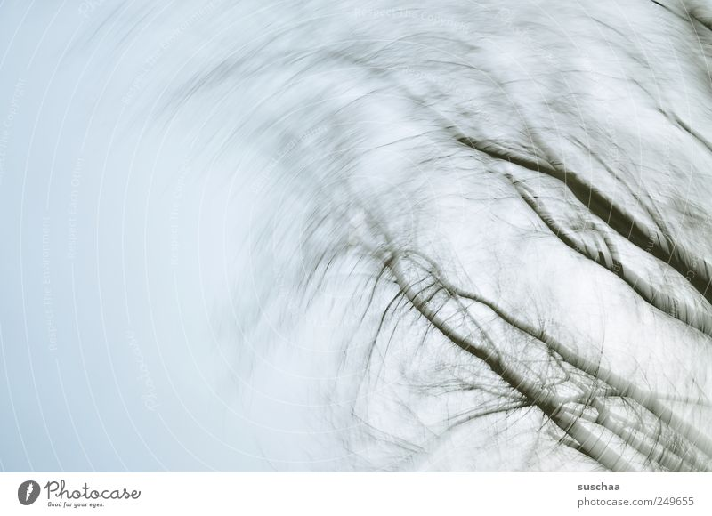 Sky Nature Winter Environment Wood Weather Wind Climate Political movements Gloomy Branch Breathe Cloudless sky