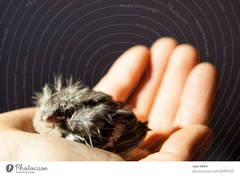 Hand Animal Baby animal Life Small Bird Wild Feather Cute Help Soft Protection Safety Safety (feeling of) Testing & Control Patient