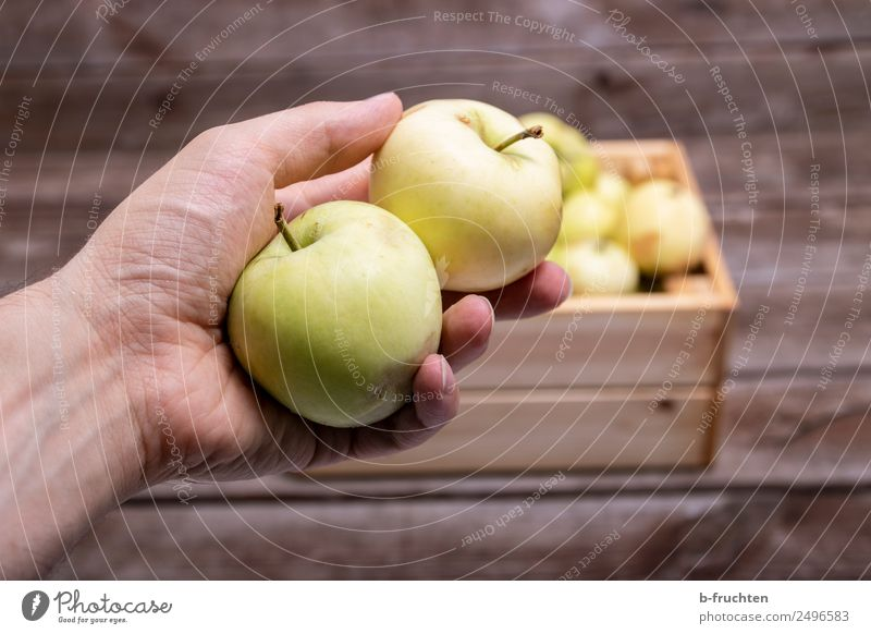 two apples in hand Food Fruit Organic produce Vegetarian diet Table Man Adults Box Collection Wood To hold on Fresh Healthy Apple Pomacious fruits In pairs 2