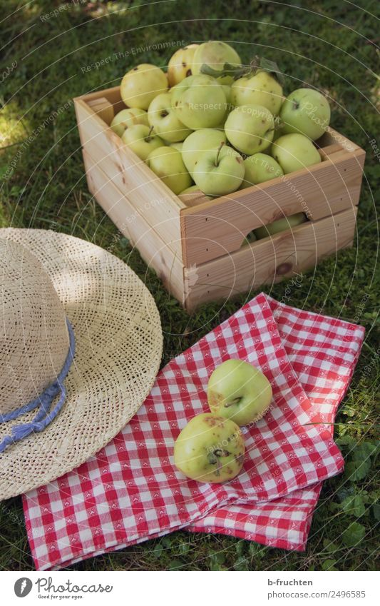 Fresh apples in the orchard Food Fruit Picnic Organic produce Healthy Vacation & Travel Summer Tree Garden Meadow Hat Box Wood Work and employment Select
