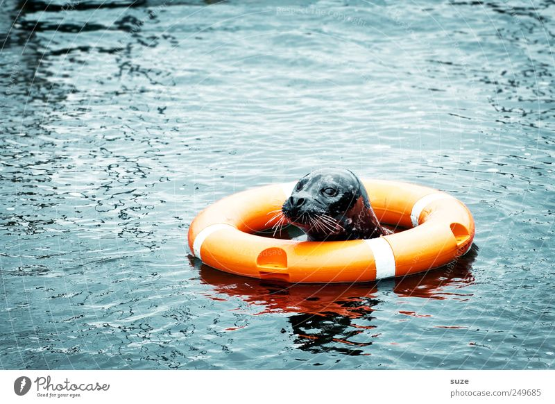 Darth Vader Environment Animal Water Ocean Wild animal Animal face 1 Swimming & Bathing Funny Curiosity Cute Blue Rescue Harbour seal Seals Life belt