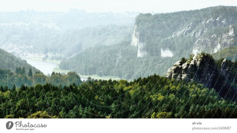 White Green Blue Summer Vacation & Travel Calm Forest Relaxation Mountain Freedom Environment Landscape Air Bright Germany Fog