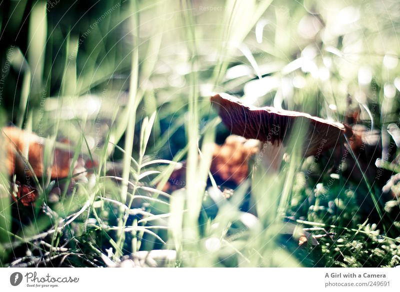 forest garden Environment Nature Plant Autumn Mushroom Stand Growth Natural Wild Brown Green Woodground Beatle haircut Hide Light green Subdued colour
