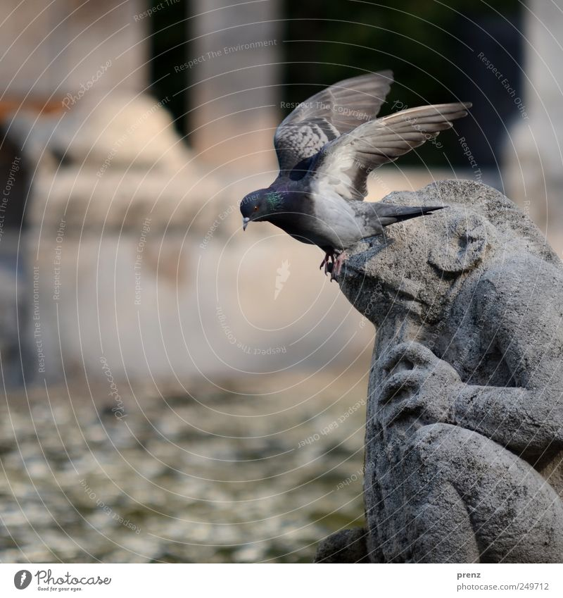 Animal Gray Flying Stone Park Tourism Wild animal Wing Well Tourist Attraction Sculpture Pigeon Frog Fairy tale Mythical creature Art