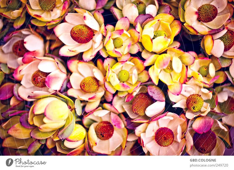 sea of blossoms Plant Autumn Flower Blossom Pot plant Garden Blossoming Esthetic Fragrance Yellow Violet Pink Red Nature Bouquet Flower stall Market garden