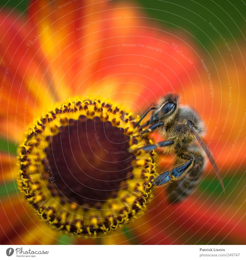 spin the wheel Beautiful Summer Garden Work and employment Eyes Environment Nature Plant Animal Elements Flower Blossom Wild animal Bee 1 Collection Esthetic