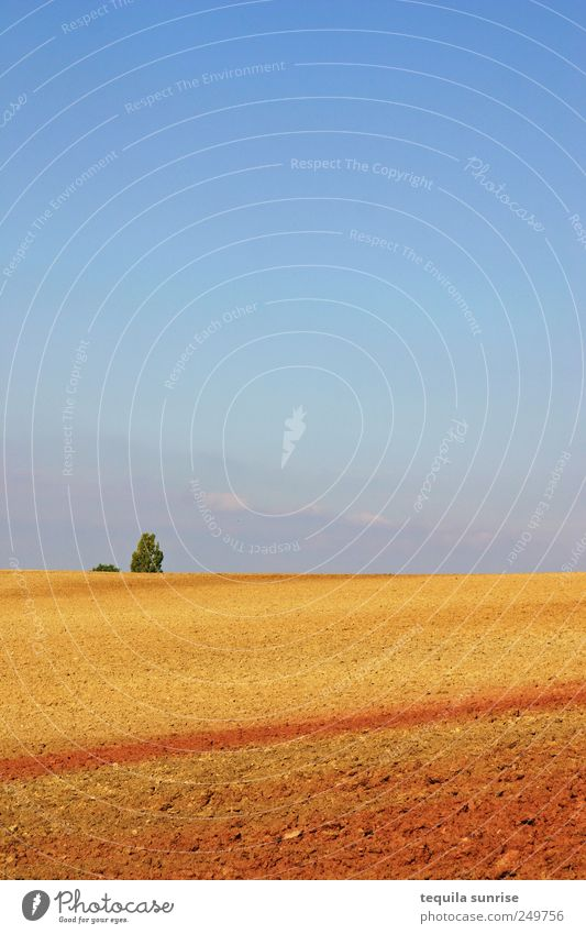 Sky Nature Blue Tree Red Plant Summer Yellow Landscape Autumn Sand Air Horizon Earth Gold Bushes