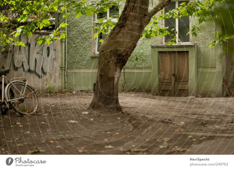 Green House (Residential Structure) Facade Backyard Courtyard Prenzlauer Berg