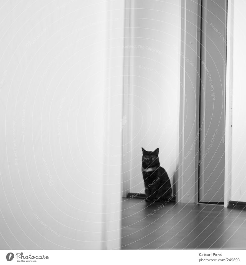 Beautiful Loneliness Animal Wall (building) Cat Bright Wait Sit Thin Observe Individual Hide Pet Hallway Striped Camouflage