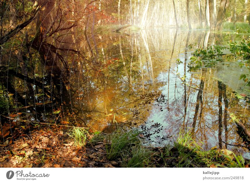 Nature Water Tree Plant Leaf Animal Forest Autumn Environment Landscape Grass Moody Lake Leisure and hobbies Earth Bushes