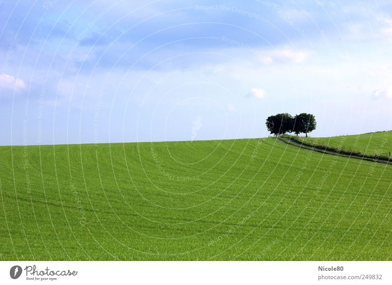 green idyll Nature Landscape Sky Summer Tree Field Calm Idyll Far-off places Loneliness Lanes & trails Green Blue sky Meadow Colour photo Exterior shot Deserted