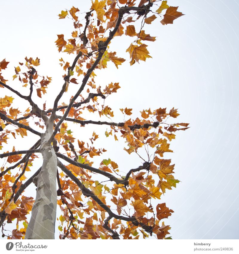 herr herbst Agriculture Forestry Environment Nature Landscape Plant Autumn Tree Leaf Garden Park Transience Deciduous tree Deciduous forest Seasons Tree trunk