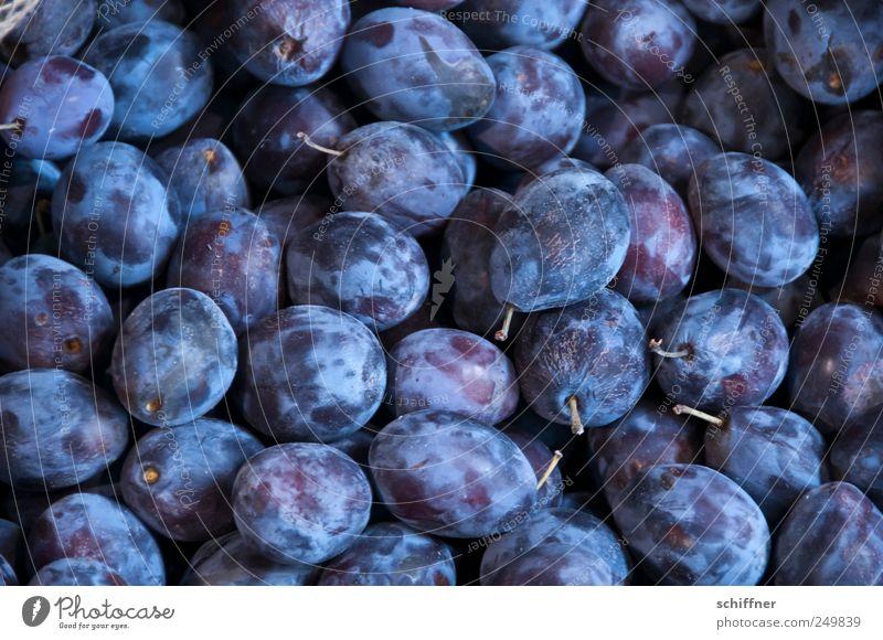 Fruit Sweet Many Violet Stalk Delicious Sour Jam Plum Plum tree Stone fruit
