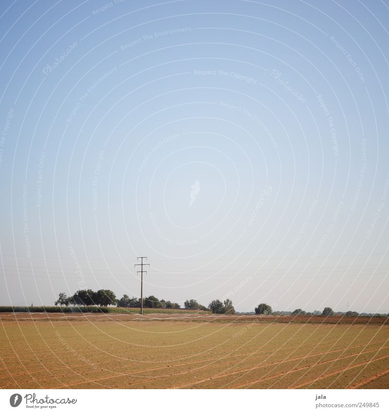 late summer Environment Nature Landscape Sky Plant Tree Grass Field Infinity Natural Blue Brown Green Colour photo Exterior shot Deserted Copy Space top