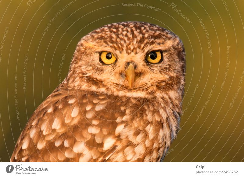 Cute owl Beautiful Nature Animal Forest Bird Wing Small Funny Natural Wild Brown Yellow Gold Green Black White wildlife Owl Prey predator sunny branch Hunter