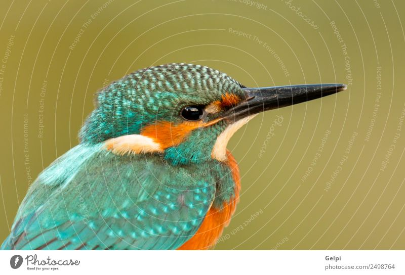 Kingfisher perched Exotic Beautiful Adults Environment Nature Animal Park Bird Observe Natural Wild Blue Green White Colour Beak branch Ornithology common