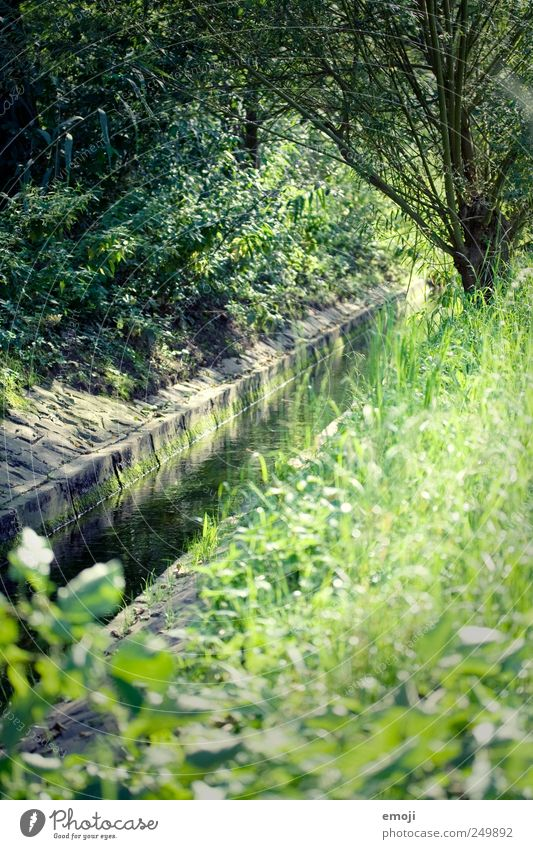 in kind Environment Nature Summer Beautiful weather Tree Grass Bushes Meadow Brook River Natural Green River bank Colour photo Exterior shot Deserted Day Light
