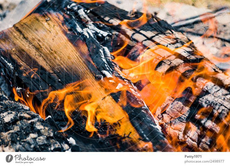 Nature Environment Wood Adventure Threat Fire Elements Hot Burn Destruction Environmental pollution Fireplace