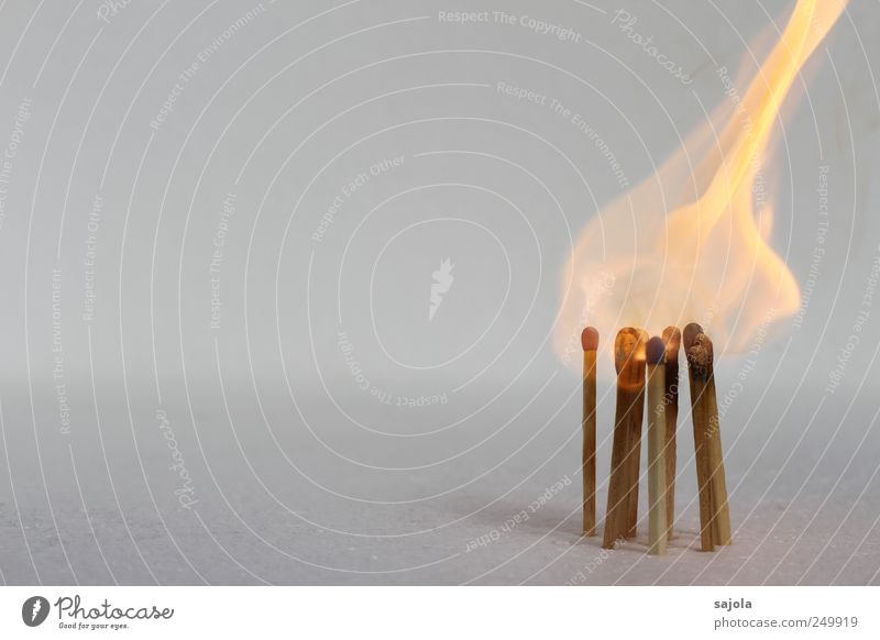 flame-hat Fire Wood Hot Burn Match Combustible Flame Colour photo Deserted Copy Space left Copy Space top Isolated Image Neutral Background Bright background