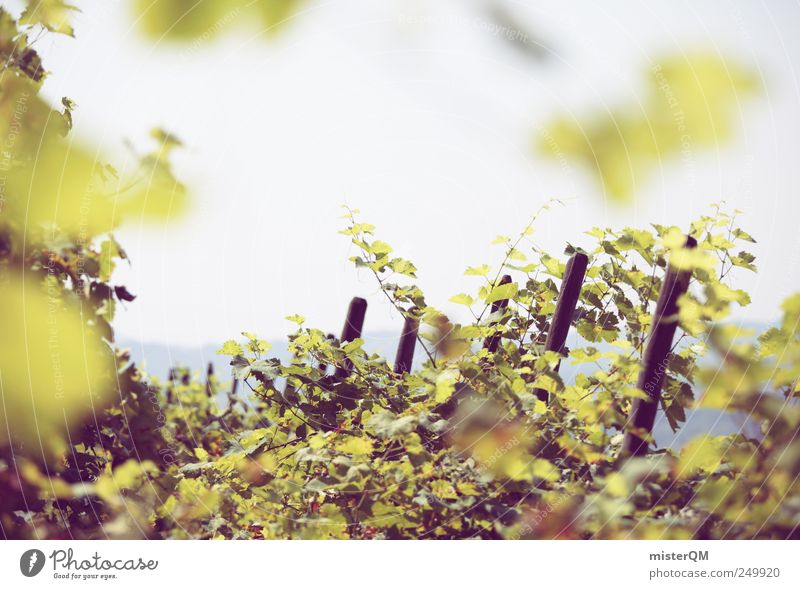 Autumn blessing. Environment Esthetic Agriculture Wine growing Slope Vineyard Bunch of grapes Grape harvest Green Mature Italy Culture Colour photo