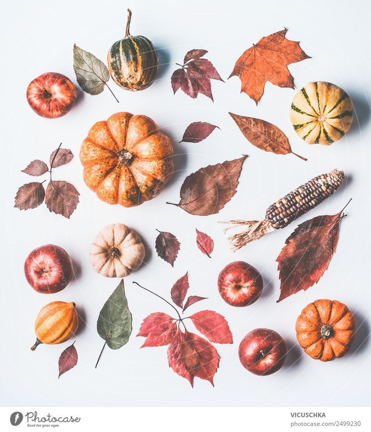 Autumn still life with pumpkin and leaves Style Design Thanksgiving Nature Yellow Autumnal Pumpkin Apple Autumn leaves Maize Collection Still Life