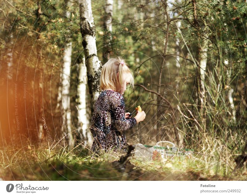Human being Child Nature Tree Plant Girl Forest Environment Autumn Grass Bright Infancy Natural Cleaning Birch tree Wild plant