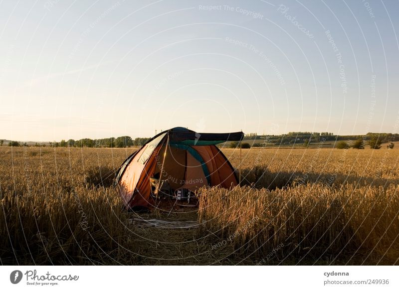 A tent in the cornfield, that's always free. Lifestyle Well-being Relaxation Calm Leisure and hobbies Vacation & Travel Adventure Far-off places Freedom Camping
