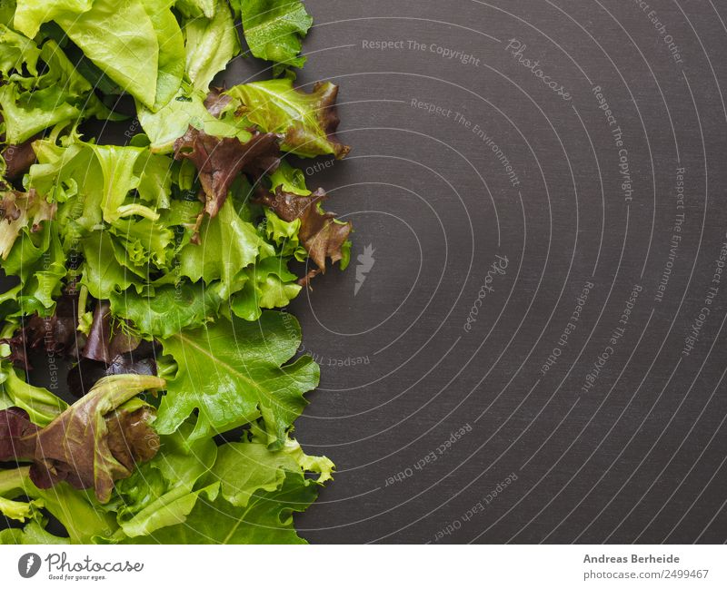 Fresh salad, lettuce leaves, mixed, table with text space Food Lettuce Salad Organic produce Vegetarian diet Diet Lifestyle Restaurant Fitness Sports Training