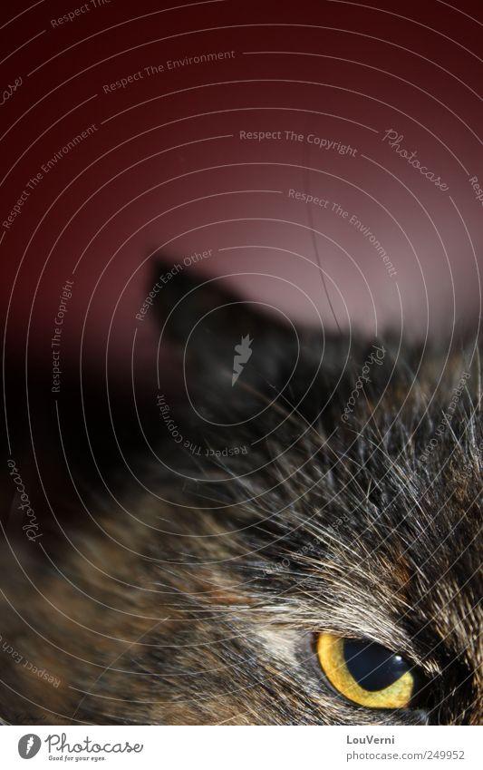 Cat Animal Uniqueness Brave Pet Domestic cat Bird of prey